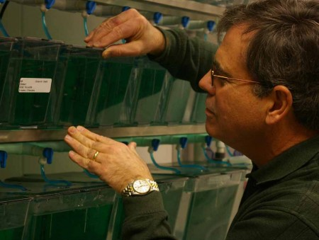 Finding a Cure: FSU biology professor James Hoerter checks on the fish tanks and operations. Hoerter and students are studying melanoma and how stem cells can help to find a cure. Torch File Photo